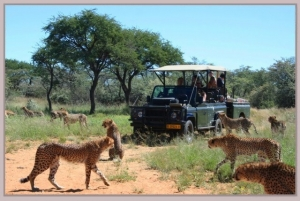 Game drive at Harnas