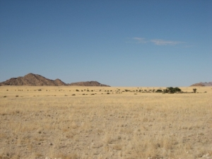 Golden plains in the NamibiaNaukluft Park