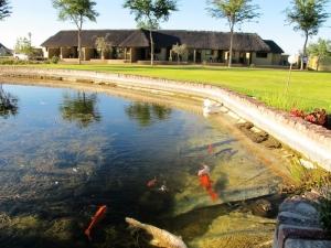 Lapa Lange's Qoi Fish pond