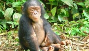 Okonni Wildlife Sanctuary