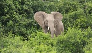 Omo Forest Reserve, Ogun State
