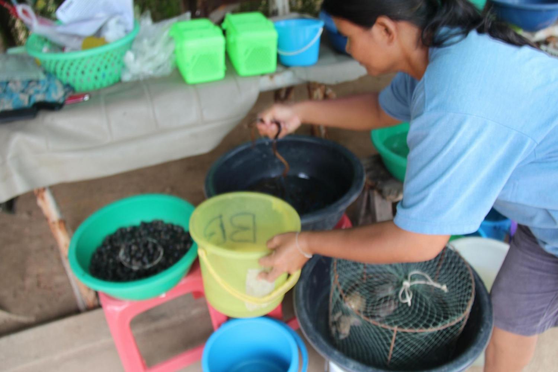 Saving eels