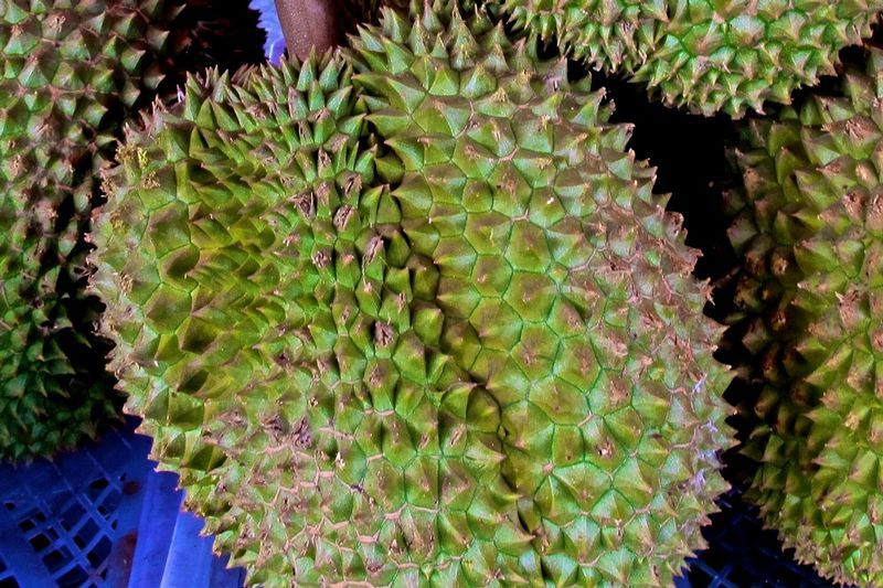 The durable durian fruit