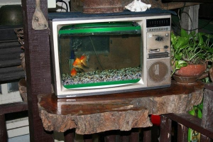 Care to watch TV, er goldfish...?