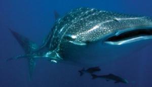 Ocean Geo Divers