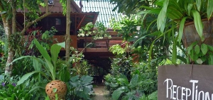 Reception at Our Jungle House