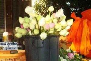 Lotus flowers at Wat Chalong
