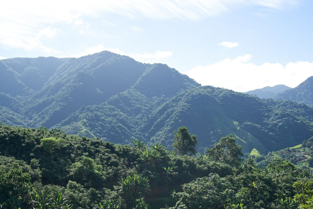 Mountains in Coffee Growing Region of Puerto Rico