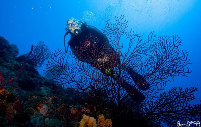 Things to do in Guanica, diving