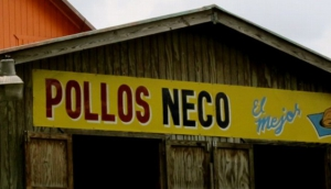 Pollos Neco