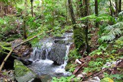 Stream in El Yunque