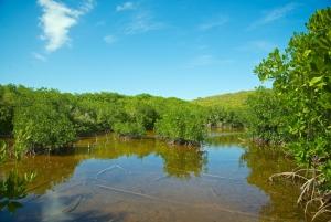 Mangrove Forest at Cabezas de San Juan