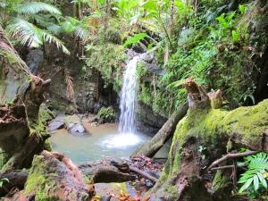 Waterfall feeding Juan Diego Creek in El Yunque