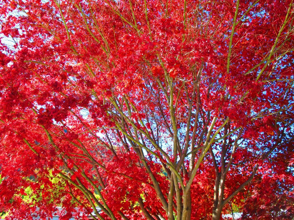 Autumn Colours of Arrowtown