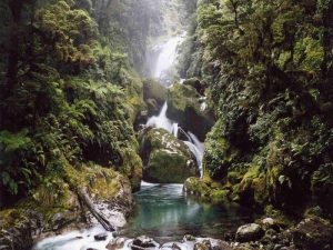 Great Walks and Tracks-Mackay falls