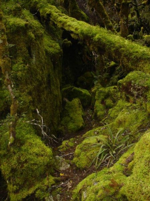 Great Walks and Tracks-The Enchanted Forest