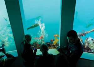 Milford Discovery Centre & Underwater Observatory