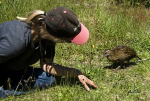 Island visitor and weka chick