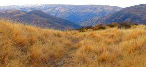 Mt Rosa Track
