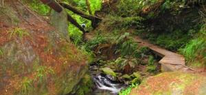 One Mile Creek Walk