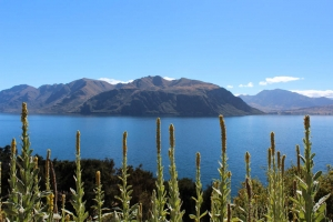 Lake Wanaka, view from Glendhu Bay track