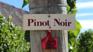 Pinot Noir, Gibbston