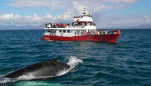Elding Whale Watching