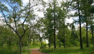 Hallormsstadaskogur