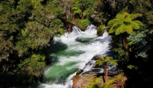 Best Free Things To Do in Rotorua