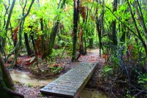 Hinehopu Reserve