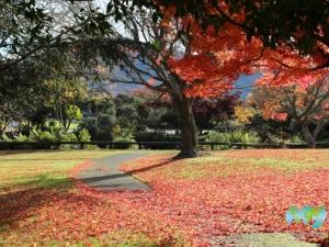 Kuirau Park