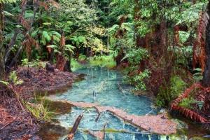 The Redwoods, Whakarewarewa Forest