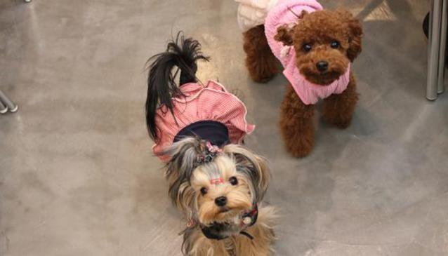 Chicu Chicu Pet Cafe & Shop