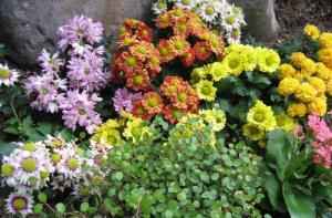 Happy Garden Flowers