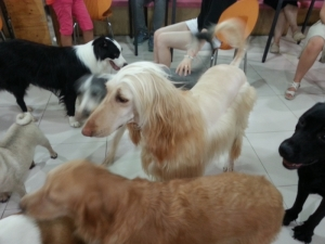 Dog cafe in Myeongdong