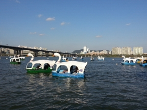 Swan pedal boats Han River