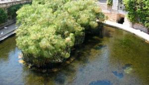 Fonte Aretusa - Arethusa Fountain