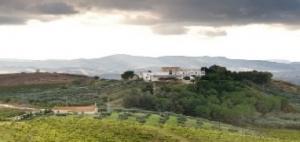 Sirignano Wine, Monreale