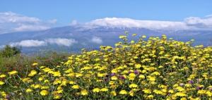 Etna flora by Luigi Strano