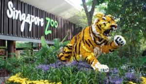 Singapore Zoo and Night Safari