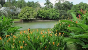 Singapore Botanic Garden, lake view