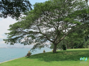 Some Shade on Sentosa Island