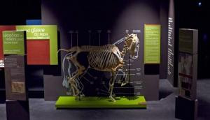Museum Lipikum