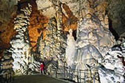 Postojna Cave Attractions