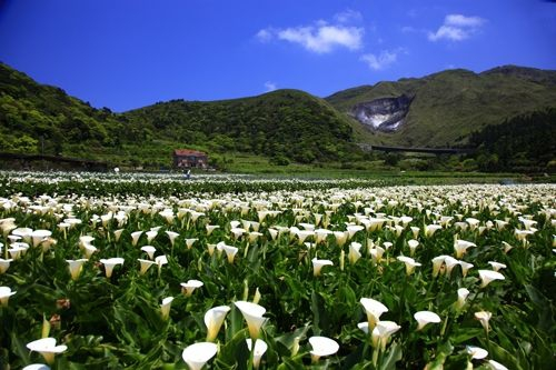 Near Yangmingshan, Taipei / Photo courtesy by Taiwan Tourism Bureau
