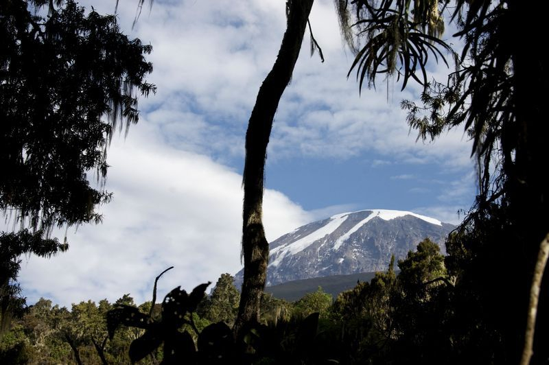 Kilimanjaro Forest (Photo Credit: Lizzie Halloran)