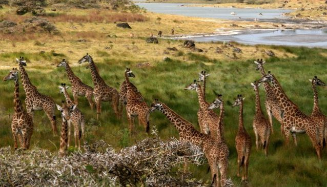 Top 10 National Parks In Tanzania for Game Viewing | My Guide Tanzania
