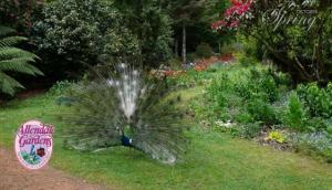 Allendale Gardens