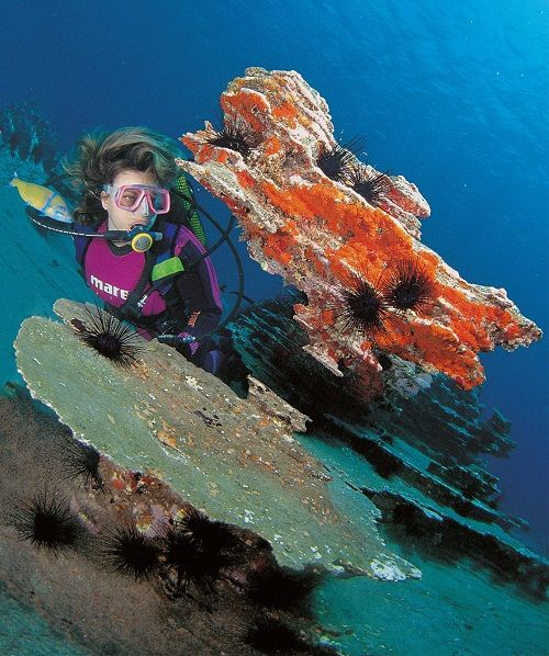 Diving in Tenerife (Credit Webtenerife)