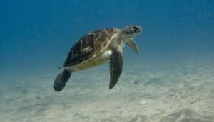 Marine Life, Tenerife